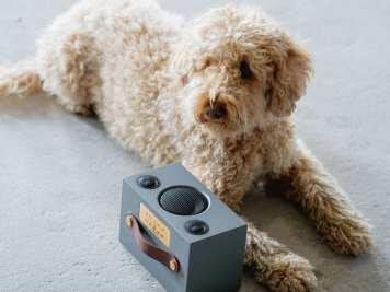 רמקול C3 של אודיו פרו, כלב