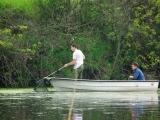 Pomor ribe u kanalu Vizelj