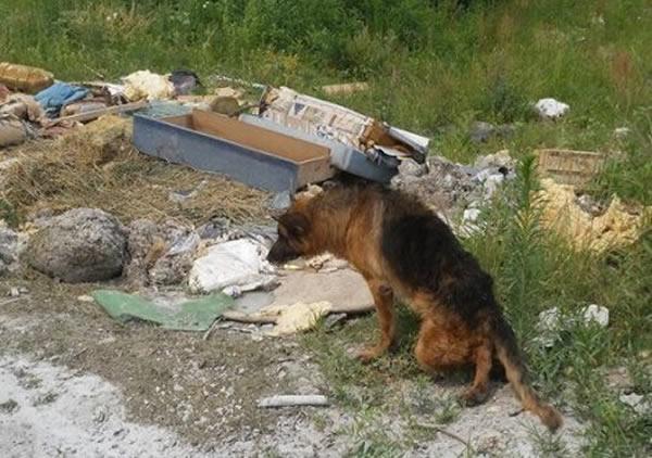 Vučjak napušten na nasipu, LOBI