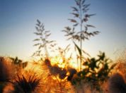 Kovilovo Zalazak Sunca