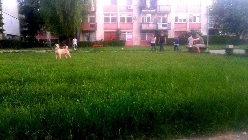 krpelj-park-2016-09