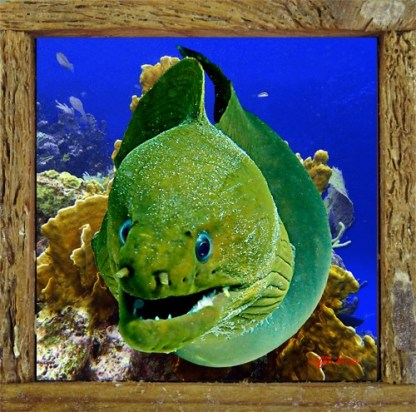Moray in the Corals