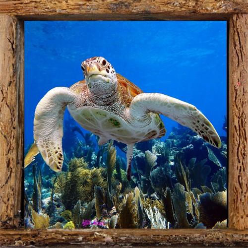 Turtle 38
