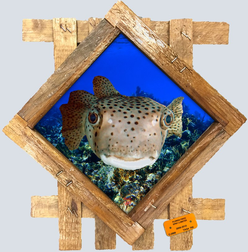 Pufferfish in wood frame