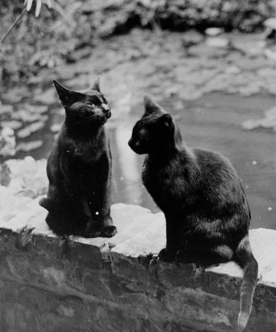 How Do Cats Communicate With Each Other Library Of Congress