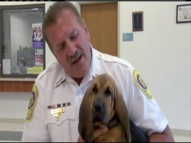 Frederick County- Va- gets new K-9 officer_80669293-159532