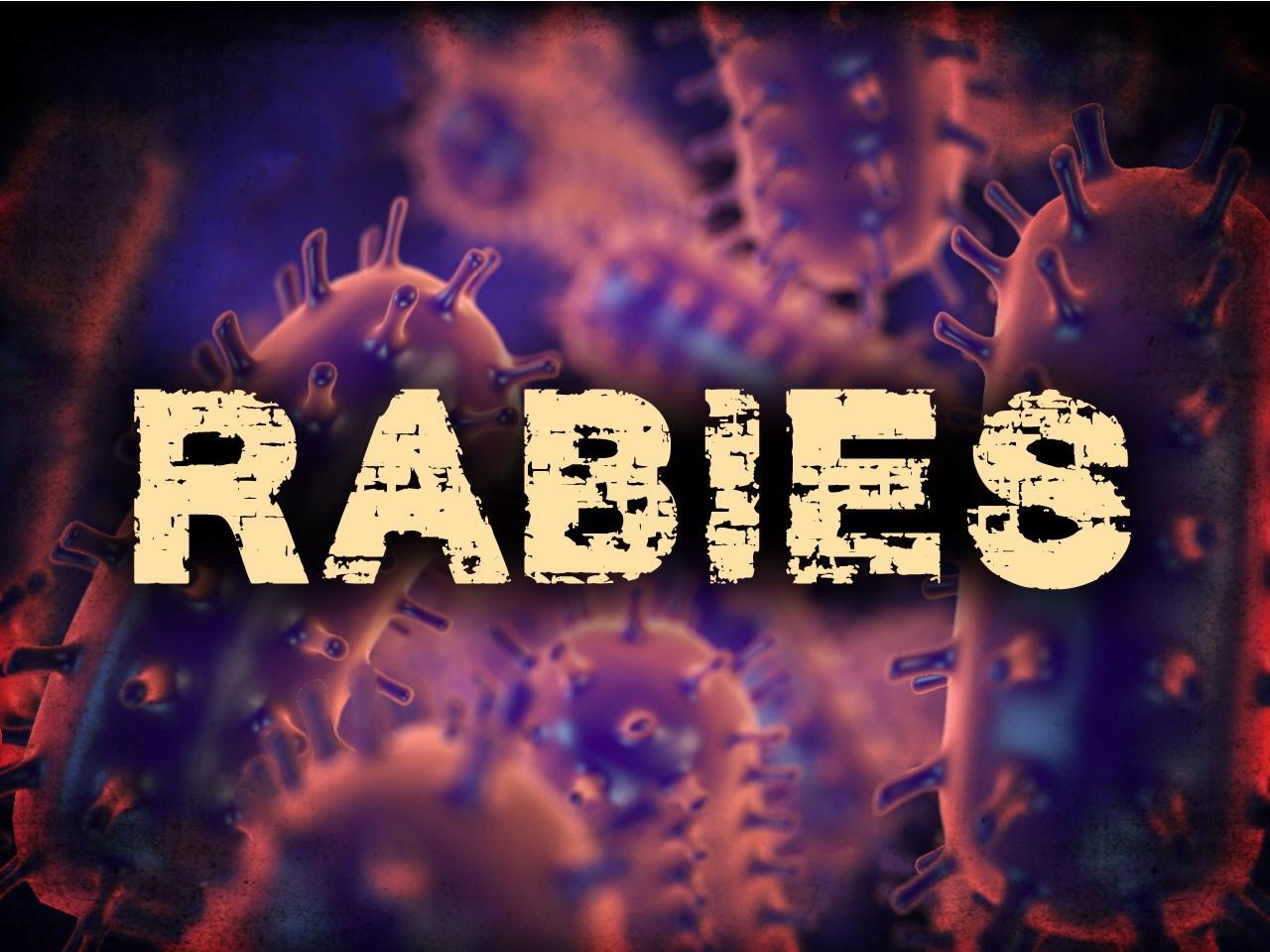 rabies_1514571321569.jpg