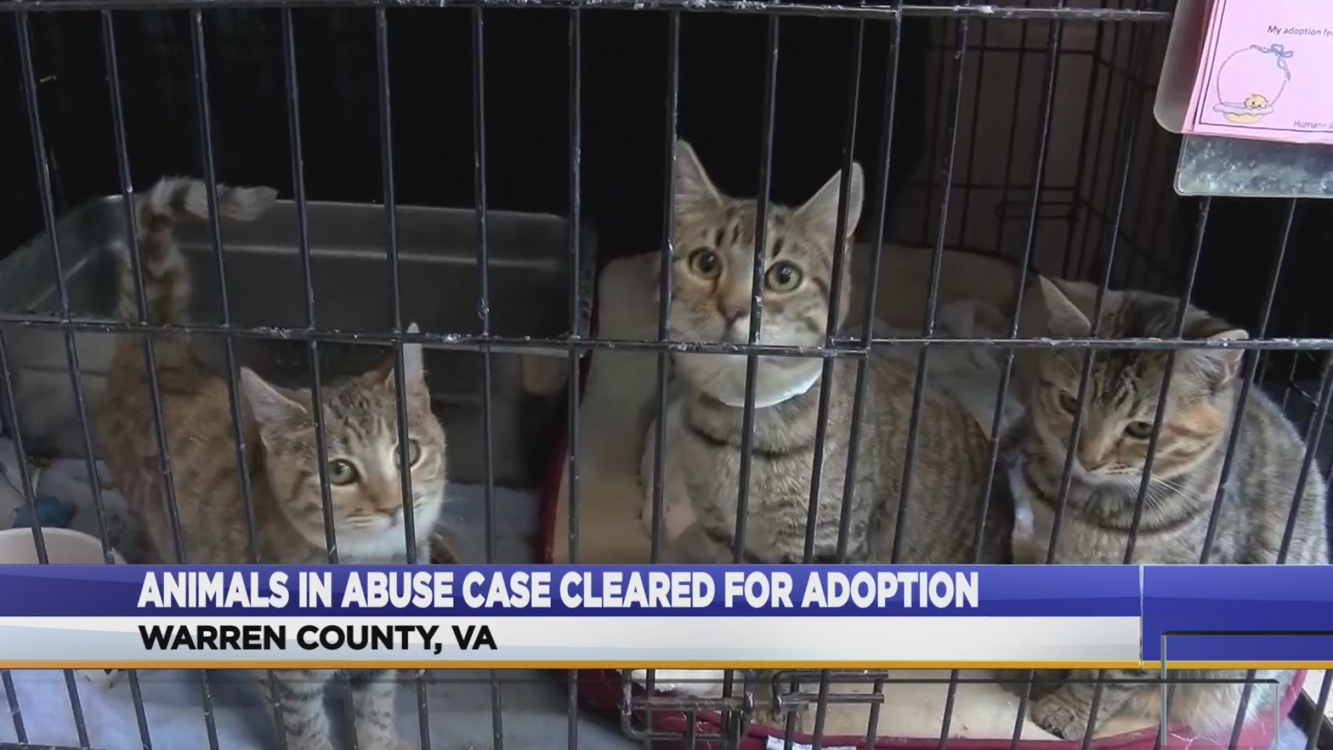 Animal_abuse_victims_can_be_adopted_0_20181213172405