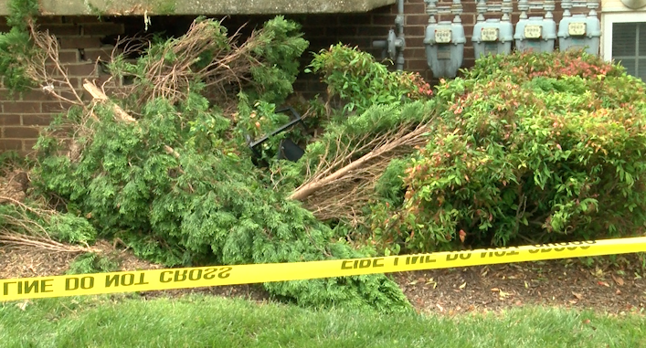 bushes fell apart due to impact of car crash