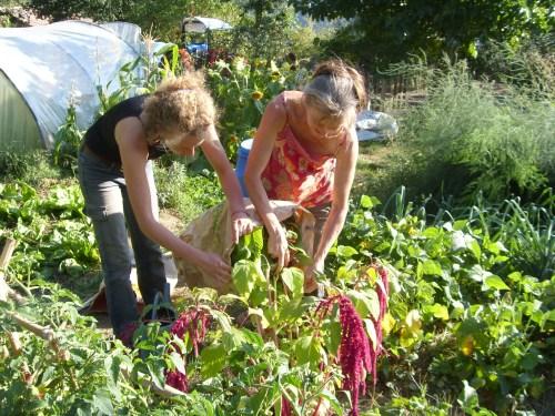IAL gardening