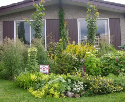Plant Combination Guide for Beginners