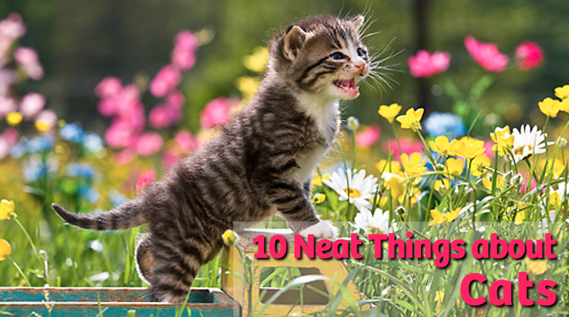 10 Neat things about cats