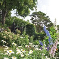 Daisies and delphiniums.