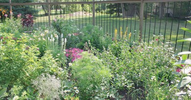 garden beauty outside the city Safely protected from ravenous deer by ten-foot-tall fence