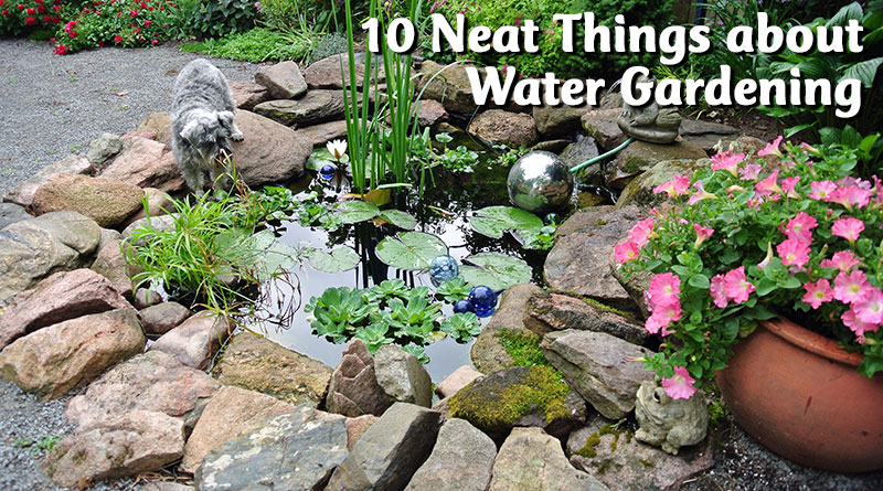 10 Neat Things about Water Gardening