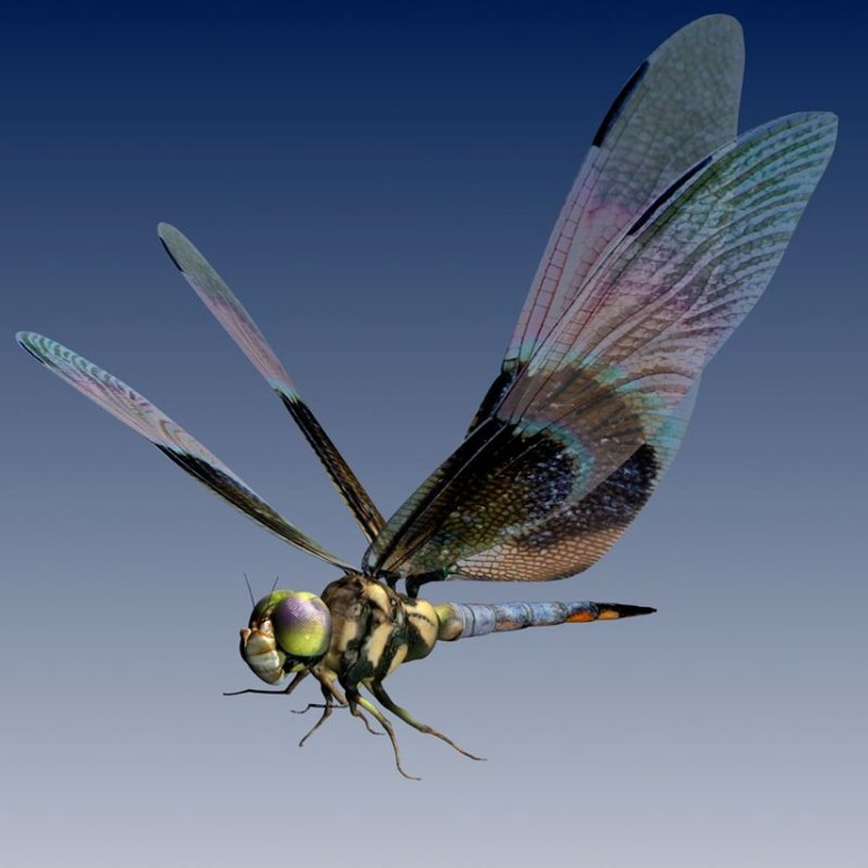 dragonflies are great fliers