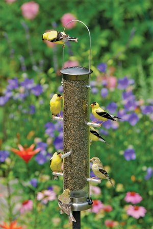 goldne finches at the feeder
