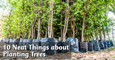 10 Neat Things about planting trees