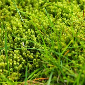 moss on lawn