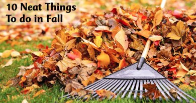 10 Neat Things to do in fall