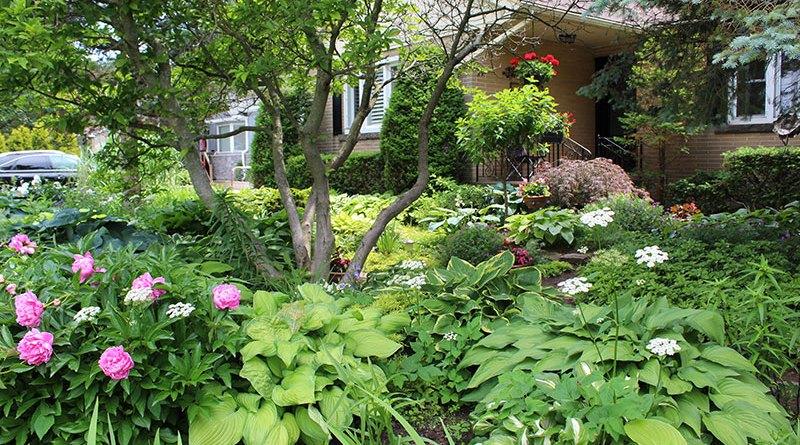 Michaela's Ontario Garden