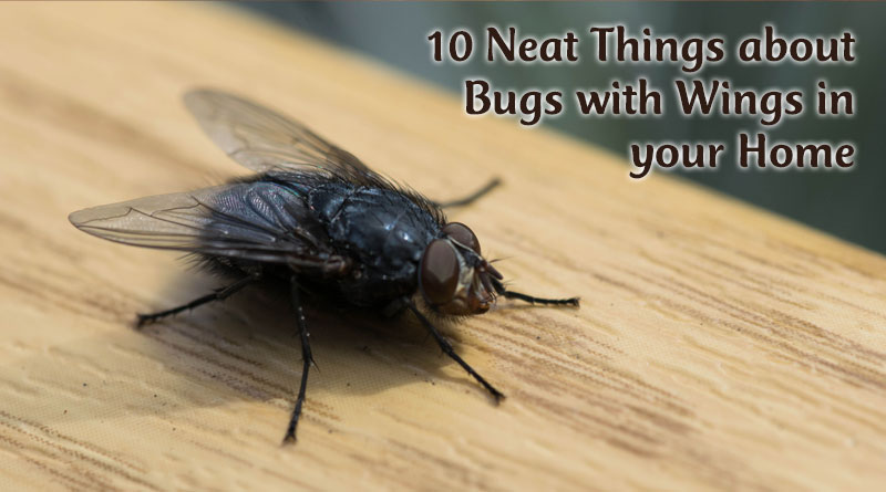 10 Neat Things about Bugs with Wings in your Home