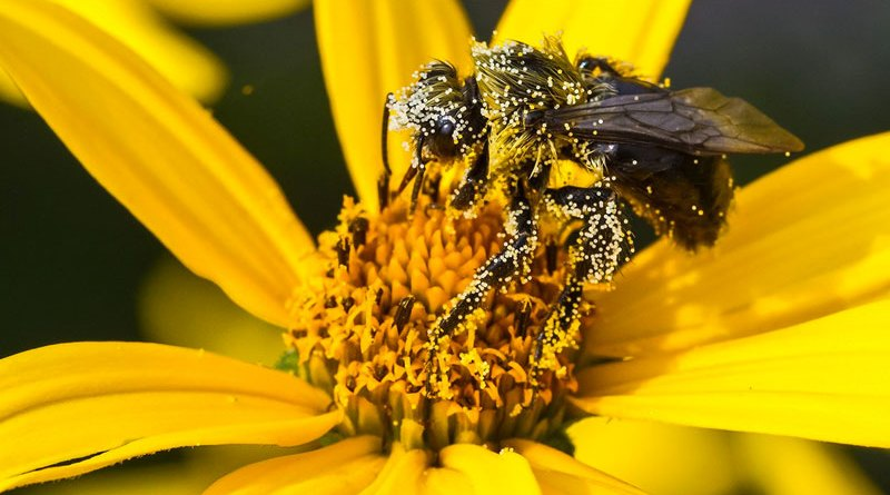 miracle of pollen