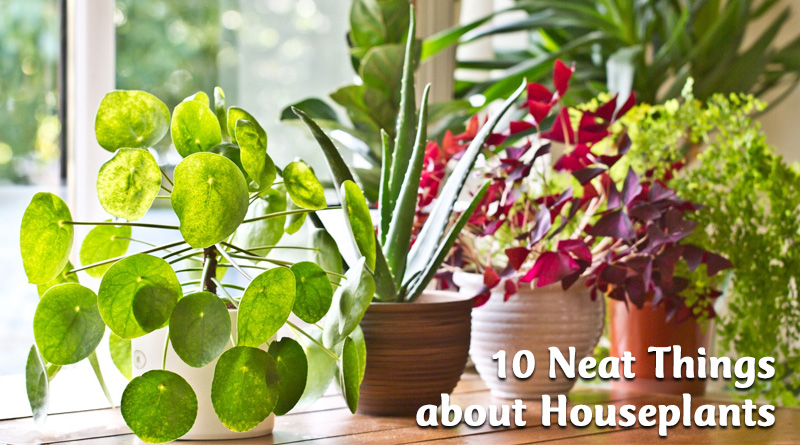 10 Neat things about houseplants
