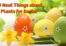 10 Neat Things: Flowers for Easter