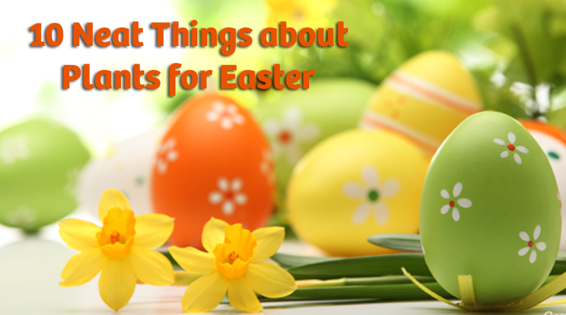 10 Neat Things about Plants for Easter