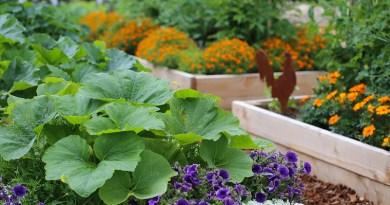planting companions