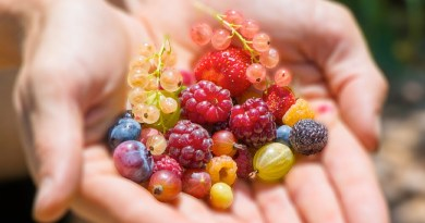 berries in the garden