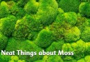 10 Neat Things: About Moss