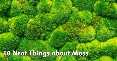 10 Neat Things about Moss