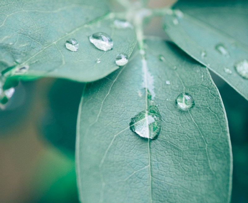 Water droplets on leaves.