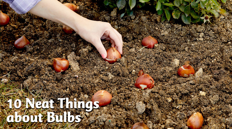 10 neat things about bulbs