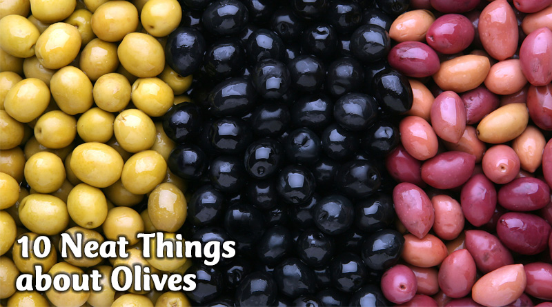 10 Neat Things about Olives