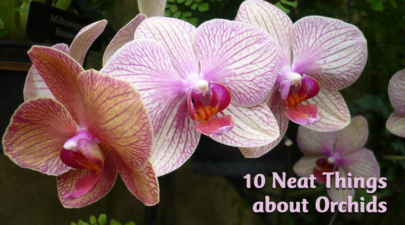 10 Neat Things about orchids