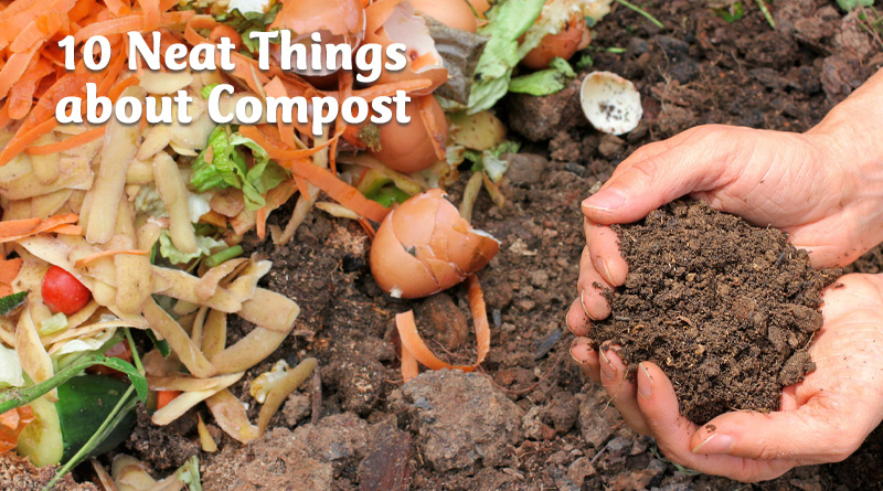 10 neat things about compost