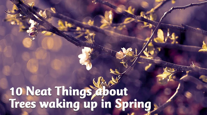 10 neat things about trees in spring