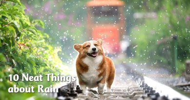 10 neat things about rain