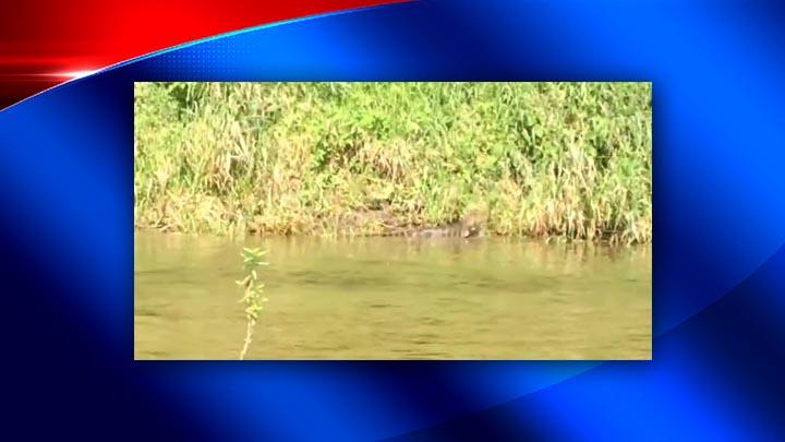 Whitney Point alligator 2_1502113217495-118809258.jpg