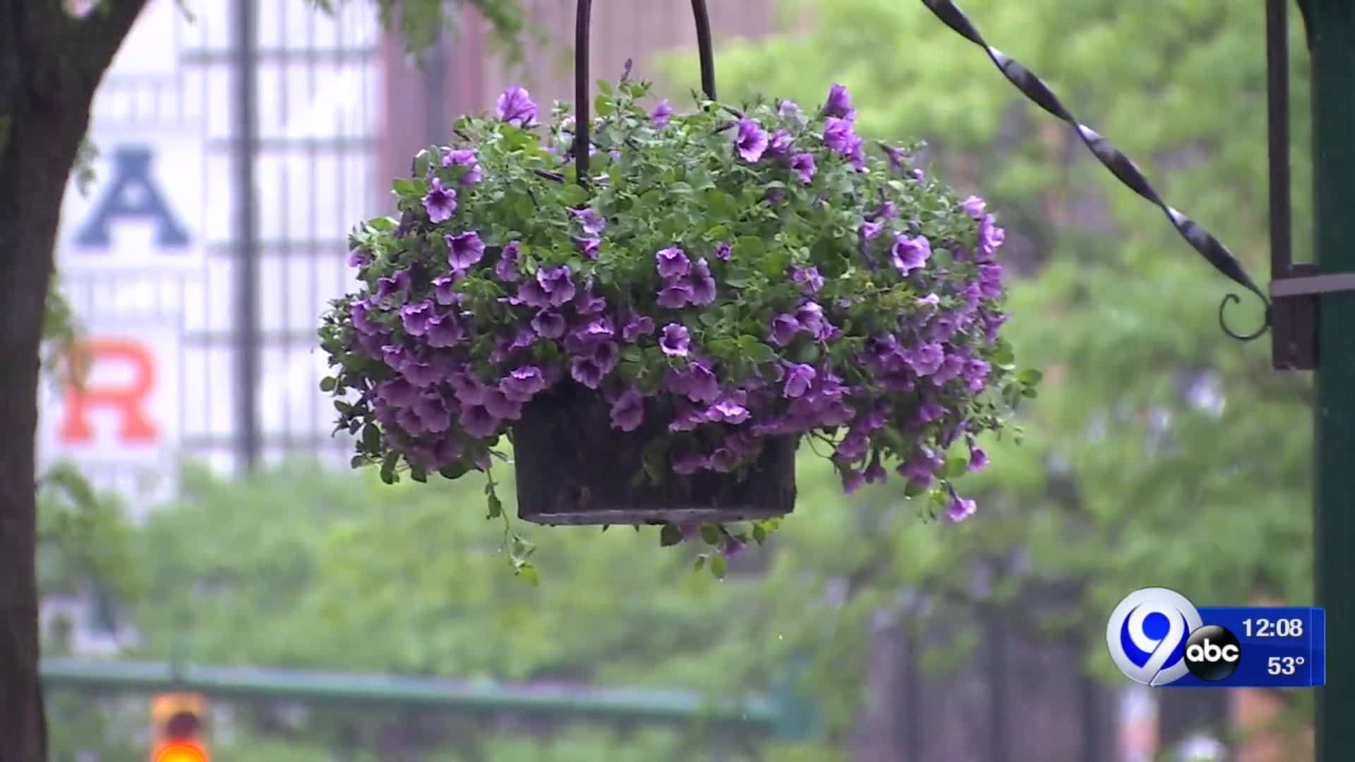Hanging_baskets_bring_the_blooms_to_Down_8_20190528162926