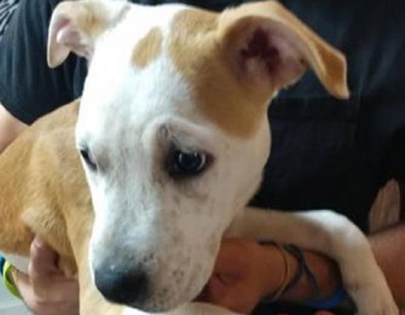 puppy found_1557756531049.jpg-118809282.jpg