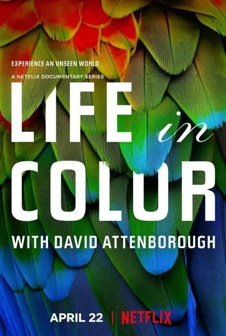 locandina la vita a colori
