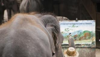 Entre elefantes y tigres en Chiang Mai