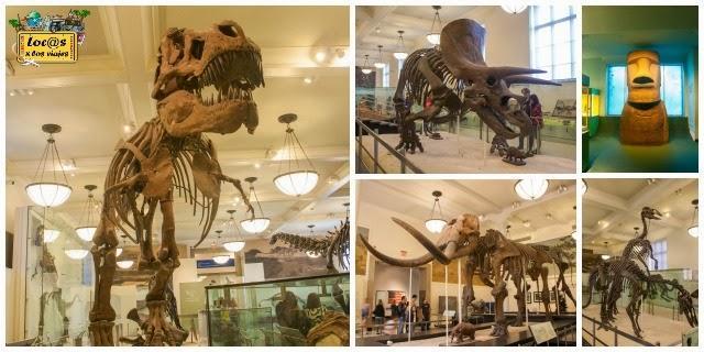museo_historia_natural