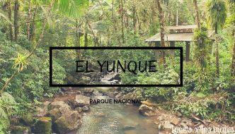 Excursión al Parque Nacional de El Yunque de Puerto Rico