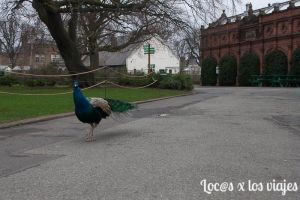 Dublin: Zoo