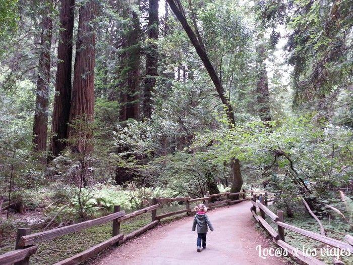 Roadtrip por la Costa Oeste: En Muir Wood